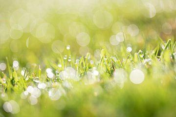 Gras met dauwdruppels en een schitterende bokeh / Dauw op het gras van KB Design & Photography