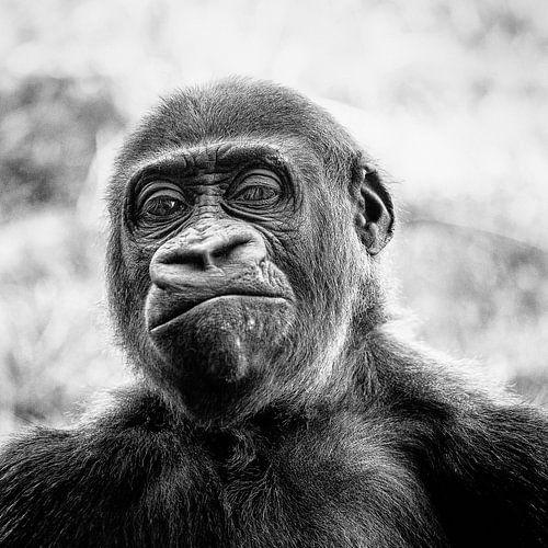 Qui est le singe? sur Ines van Megen-Thijssen