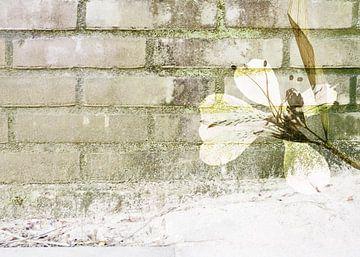 Muurbloem van Akira Peperkamp