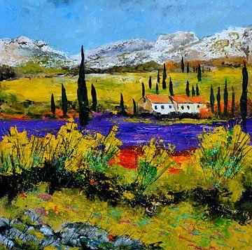 Lavender in Provence sur pol ledent