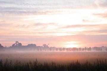 Nebliger Sonnenaufgang Elst von Nicky Kapel