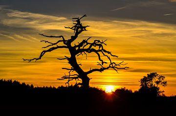 Silhouet van een boom tegen zonsondergang van Fred van Bergeijk