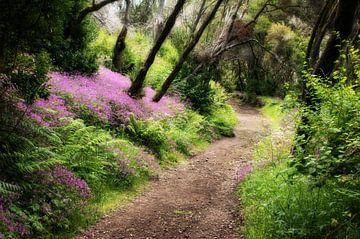 Bosweg in het sprookjesachtige bos op La Gomera van Max Steinwald
