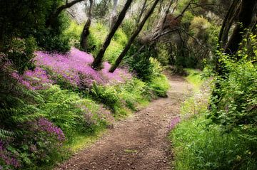 Waldweg im Märchenwald auf La Gomera