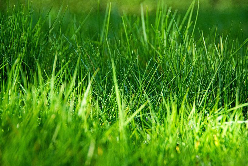 L'herbe fraîche sur Simen Crombez