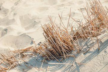 Ein Tag am Strand von Gonnie van Roij