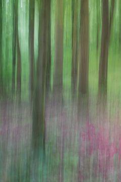 Bewogen bos van Kris Hermans