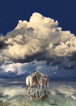 Zebras mit Spiegelung von Alex Neumayer