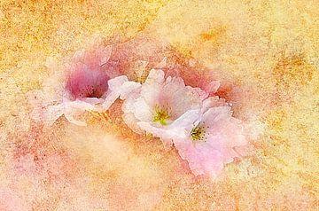 Frühlingsduft - Kirschblüte von Claudia Gründler