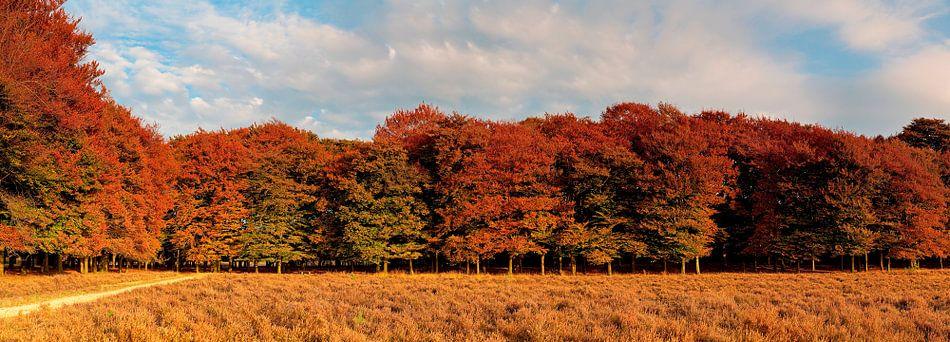 Panorama herfst kleuren van Anton de Zeeuw