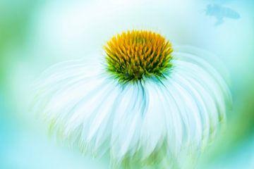 fleur déplacée avec abeille sur Francis Dost