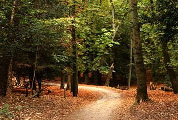 Path into the woods von Yvonne van Dormolen