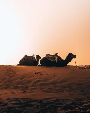 Wüste Sahara, Marokko von Marion Stoffels