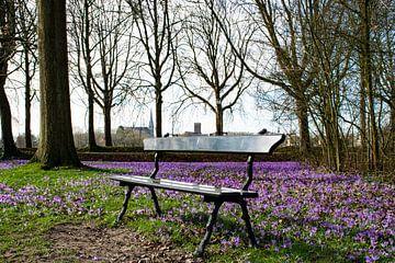 Park de Plantage van Ingrid de Vos - Boom