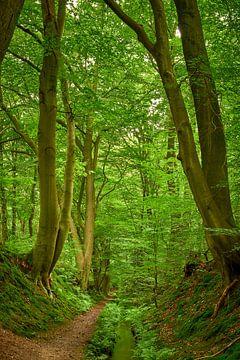 Wallen, bomen en een kabbelend beekje van Jenco van Zalk