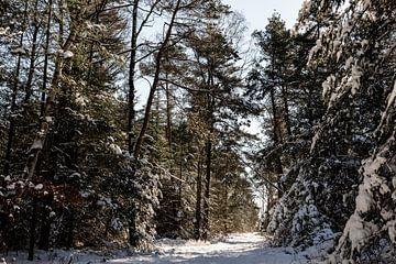 Eine Allee im Winterwunderland von Tamara Geluk