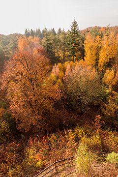 Bos in herfstkleuren van