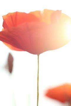 Sommer Liebe von Markus Wegner