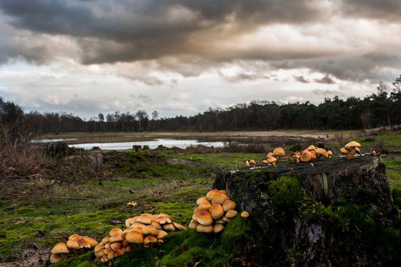 landschap met paddestoelen  van Rubin Versigny