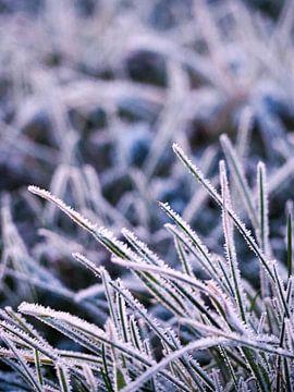 Eerste winterdag van Reflection of Nature