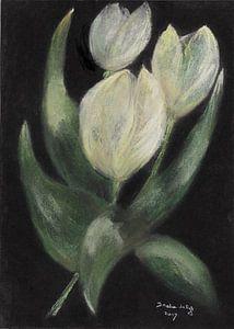 Weiße Tulpen.