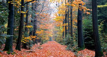 Herbstwald von Erwin Reinders