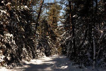 Een bospad van Tamara Geluk