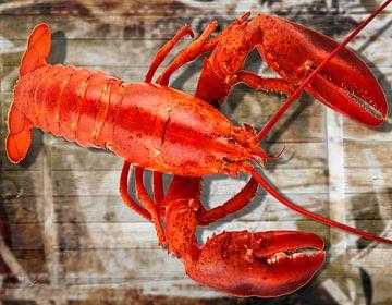 Rode kreeft gekookt op houten achtergrond van Christine Vesters Fotografie