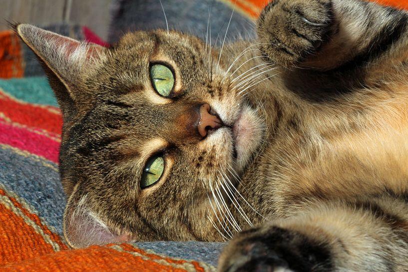 cyperse kat van Marieke Funke