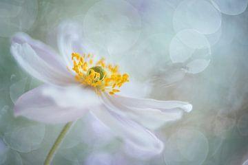 Rêveries de fleurs sur Christl Deckx
