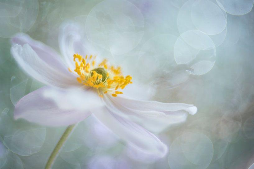 Rêveries de fleurs van Christl Deckx