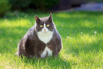 Dikke kat in de tuin von Dennis van de Water