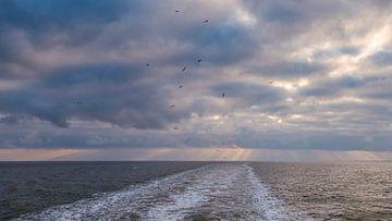 Bye Bye Birds sur Wad of Wonders