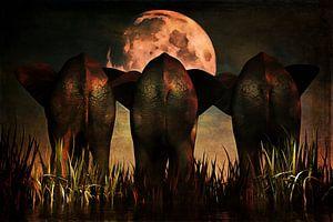 Dierenrijk – Olifanten Familie portret