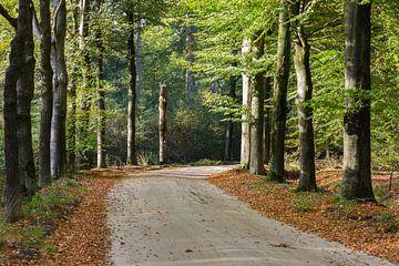 Buchenallee im Herbstgefieder von Peter van Rooij
