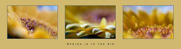 """""""Der Frühling liegt in der Luft"""" mit einer Gerbera von Eddy Westdijk"""