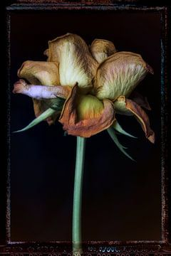 Alte Blumen 16 von Henk Leijen