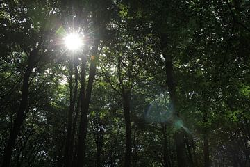 Le soleil à travers les arbres