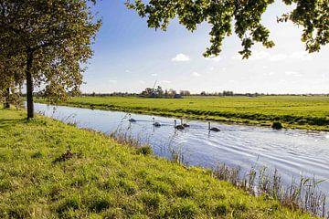 Nederlandse weiland landschap van Déwy de Wit