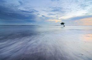 Eenzaam boompje in de zee in Bali van