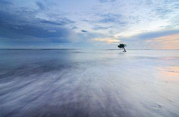 Arbre solitaire dans l'océan sur Bali. sur Jos Pannekoek