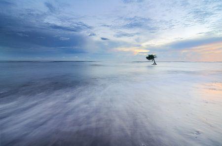 Eenzaam boompje in de zee in Bali