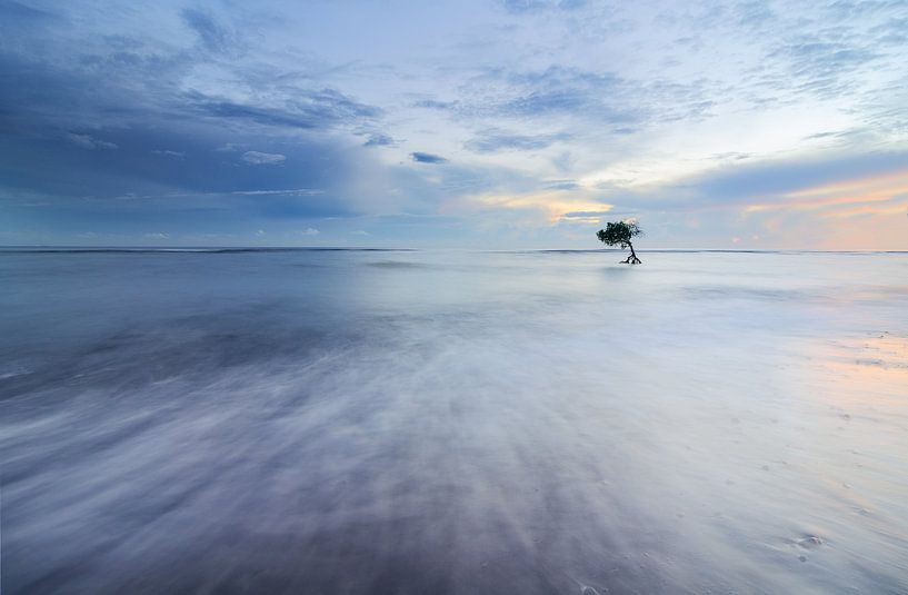 Einsamer Baum im Ozean auf Bali. von Jos Pannekoek