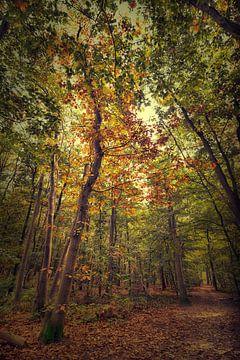 Bos in de herfst van Egon Zitter