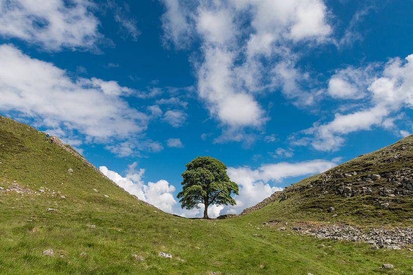 Tree van Johanna Blankenstein