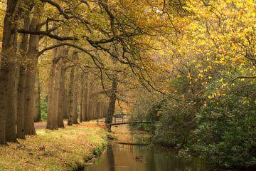 Herfst in De Horsten van Birgitte Bergman