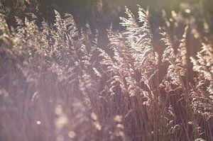 Natuur foto print voor aan de muur, gras,zon,lensflare strand