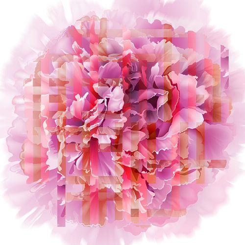Pioenroos roze rood oranje van