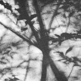 Dreamy Forrest #2 - schwarz/weiß von Floris Kok