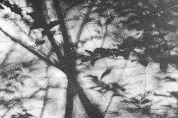 Dreamy Forrest #2 - zwart/wit van Floris Kok